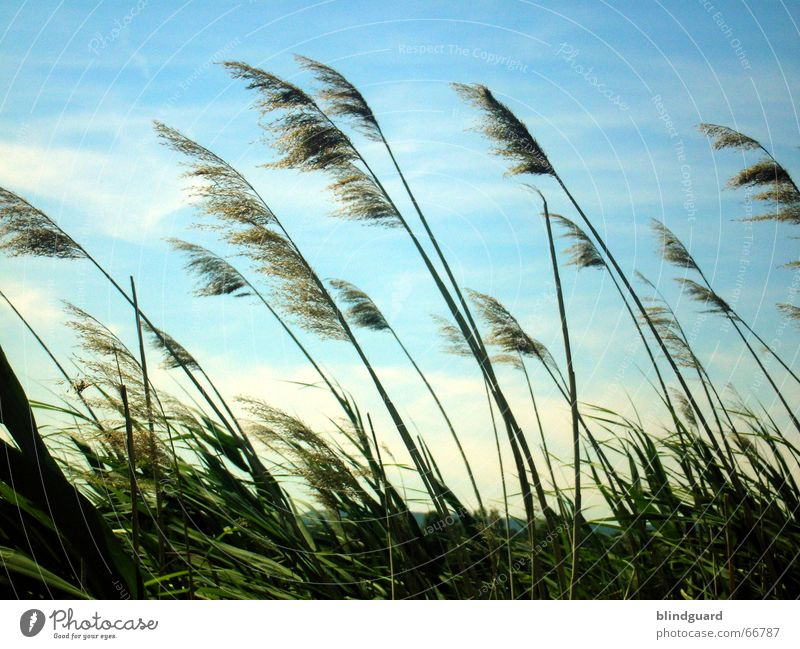 Nature Sky Sun Green Blue Summer Vacation & Travel Clouds Relaxation Emotions Grass Movement Freedom Air Moody Wind