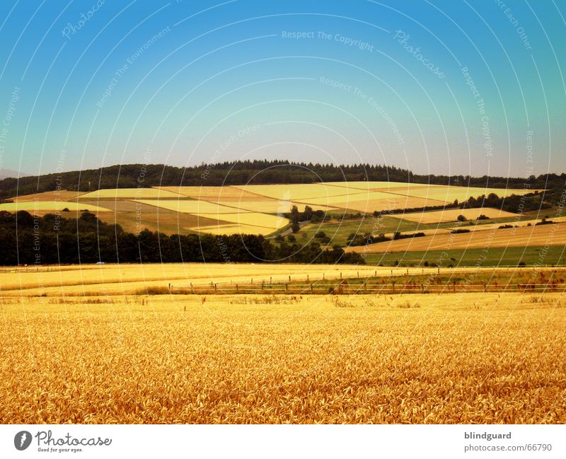 Nature Sky Summer Far-off places Forest Mountain Landscape Field Gold Grain Border Division Wheat Ear of corn