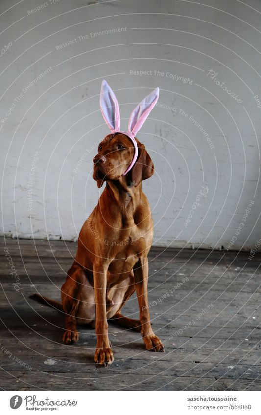 Dog Joy Animal Feasts & Celebrations Exceptional Brown Party Pink Sit Wait Cute Cool (slang) Easter Pelt Carnival Brunette