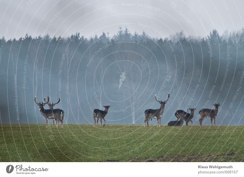 Blue Green Animal Winter Far-off places Forest Spring Gray Freedom Brown Horizon Field Wild Wild animal Stand Observe
