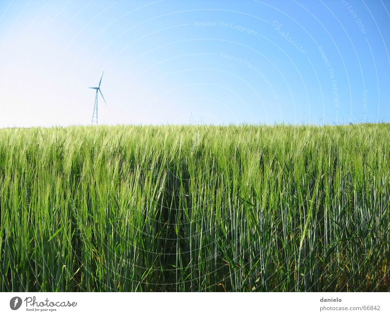 Nature Sky Sun Green Summer Calm Field Wind Energy industry Growth Science & Research Wind energy plant Grain Maturing time
