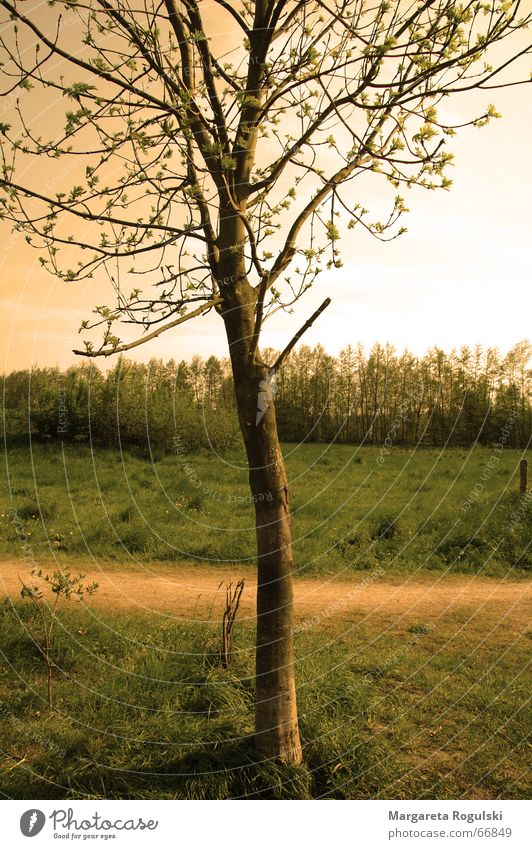 Tree Autumn Meadow Grass Lanes & trails Warmth Field Physics Summer evening