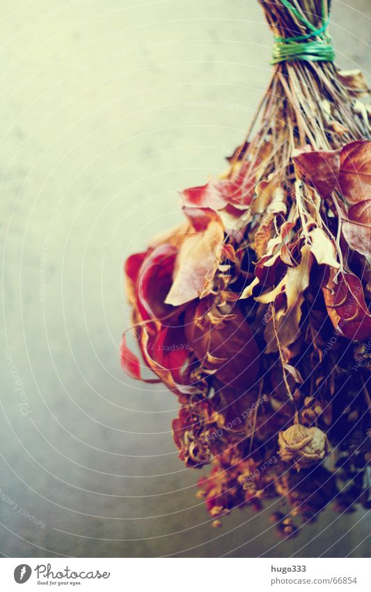 Bouquet (dry) hanging in front of wall 2 Dried flower Flower Dry Suspended Rose Attic Hatch Grief Still Life Hot String Sadness Decoration drying flowers