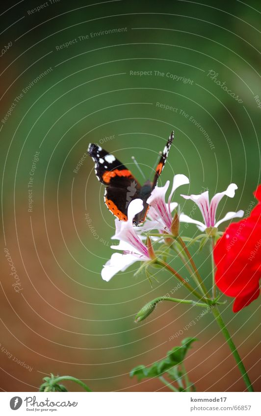 Flower Blossom Air Wing Butterfly Balcony Airplane landing Departure Stamen Nectar Balcony plant
