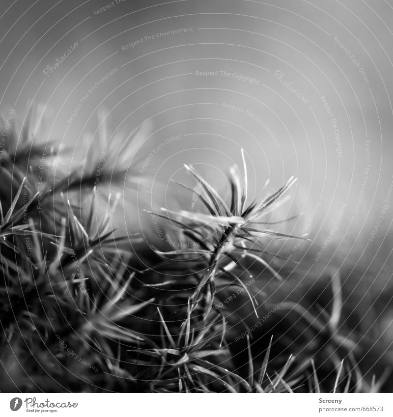 In the woods... Nature Plant Moss Wild plant Forest Soft Serene Patient Calm Idyll Growth Black & white photo Exterior shot Macro (Extreme close-up) Deserted