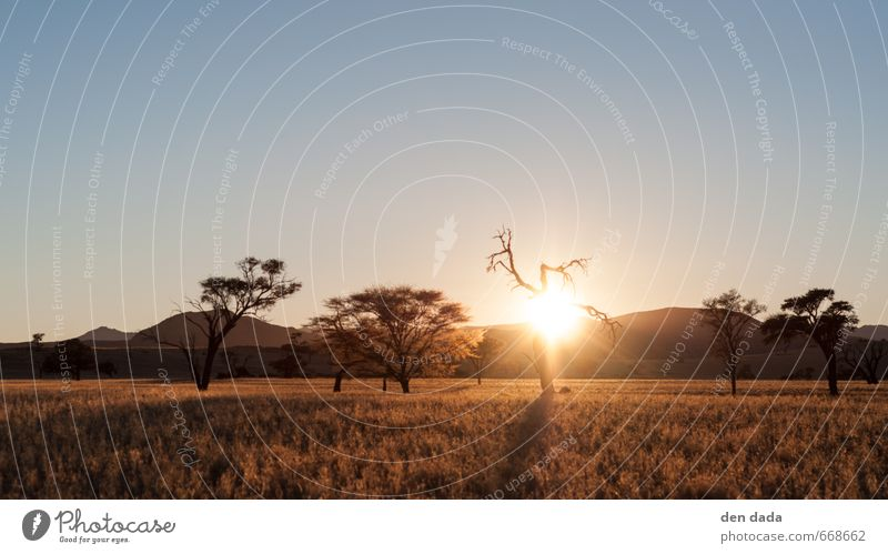 sunrise in the Namib Vacation & Travel Tourism Trip Adventure Far-off places Freedom Safari Expedition Summer vacation Hiking Nature Landscape Sand