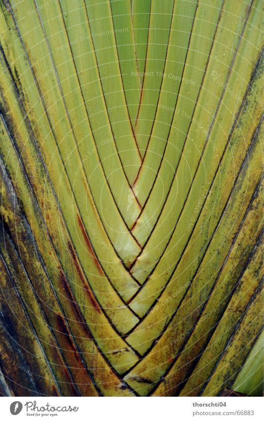 entanglement Palm tree Plant Green Pattern Reticular Grating Virgin forest Nature Net