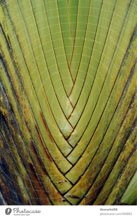 Nature Green Plant Net Virgin forest Palm tree Grating Reticular