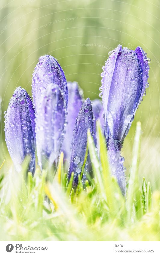 spring messengers Environment Nature Plant Earth Water Drops of water Sun Sunlight Spring Beautiful weather Warmth Flower Grass Leaf Foliage plant Wild plant
