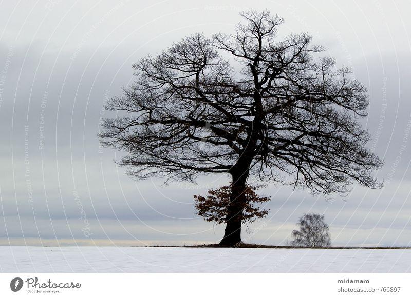 Nature Beautiful Tree Plant Winter Calm Snow Sadness Landscape Ice Moody Frost Romance Longing Treetop Oak tree