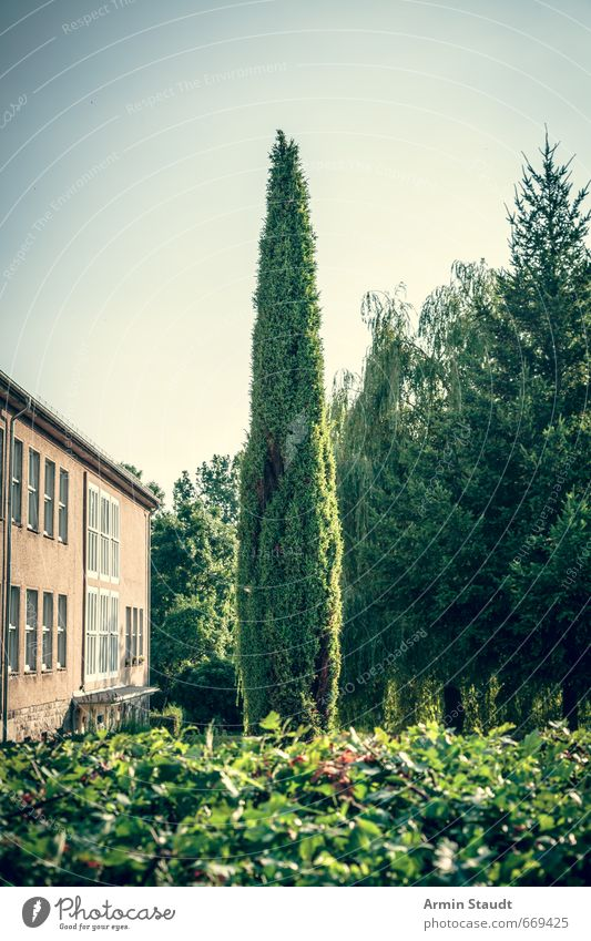 Pointed tree in the garden Summer Nature Animal Cloudless sky Beautiful weather Tree Garden Brandenburg Small Town Deserted House (Residential Structure)