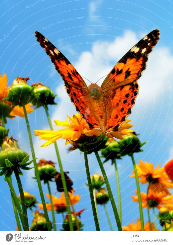 Beautiful Sky Flower Summer Clouds Colour Freedom Flying Wing Butterfly