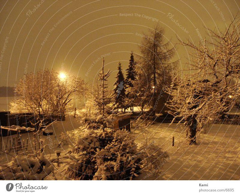 Tree Winter Dark Snow Garden Landscape Bushes Village