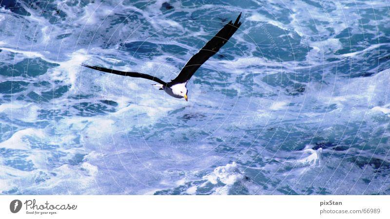 seagull Ocean Foam White Wing Bird Surf Black-headed gull  Water Flying Blue Aviation