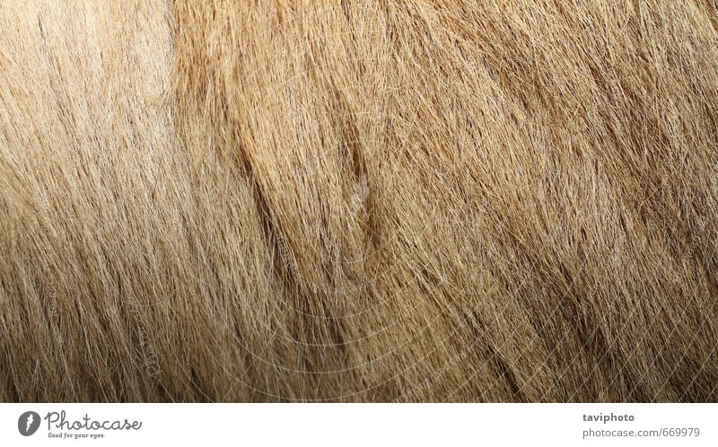 bactrian camel textured fur Nature Animal Natural Brown Hair Skin Wild Authentic Pelt Zoo Material Wallpaper Mammal Wool Consistency Domestic