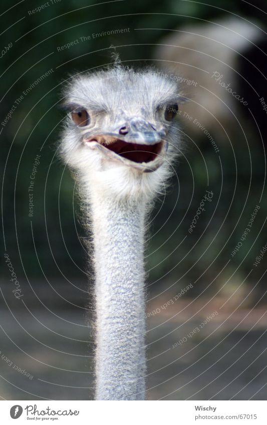 Oiiii! Emu Animal Bird Head Looking Zoo Bouquet