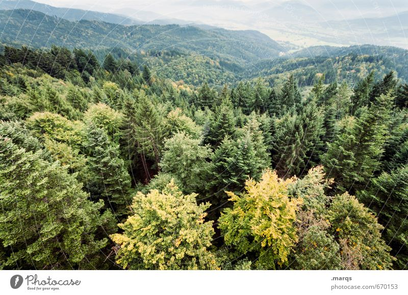 from above Trip Adventure Environment Nature Landscape Summer Autumn Beautiful weather Tree Treetop Forest Hill Valley Exceptional Large Tall Natural Above