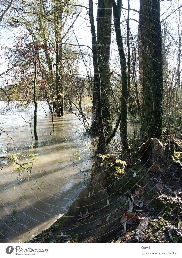 Floodplain forest against the light Back-light Tree River Deluge Shadow