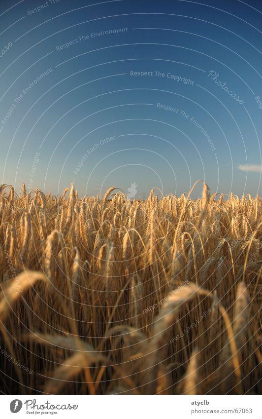 Sky Summer Clouds Life Freedom Field Romance Harvest Dusk Rich Wheat Barley