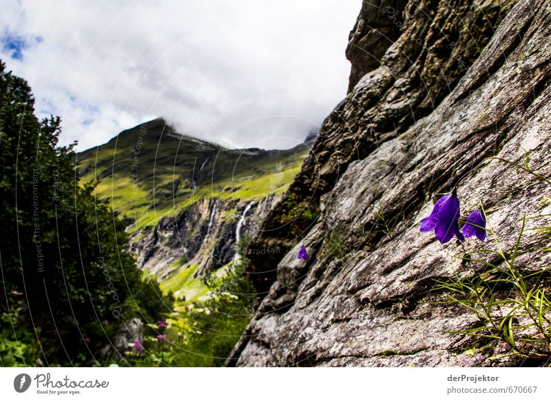 The mountain calls 11 - with flowers in the foreground Environment Nature Landscape Plant Elements Clouds Summer Climate Beautiful weather Bad weather Tree