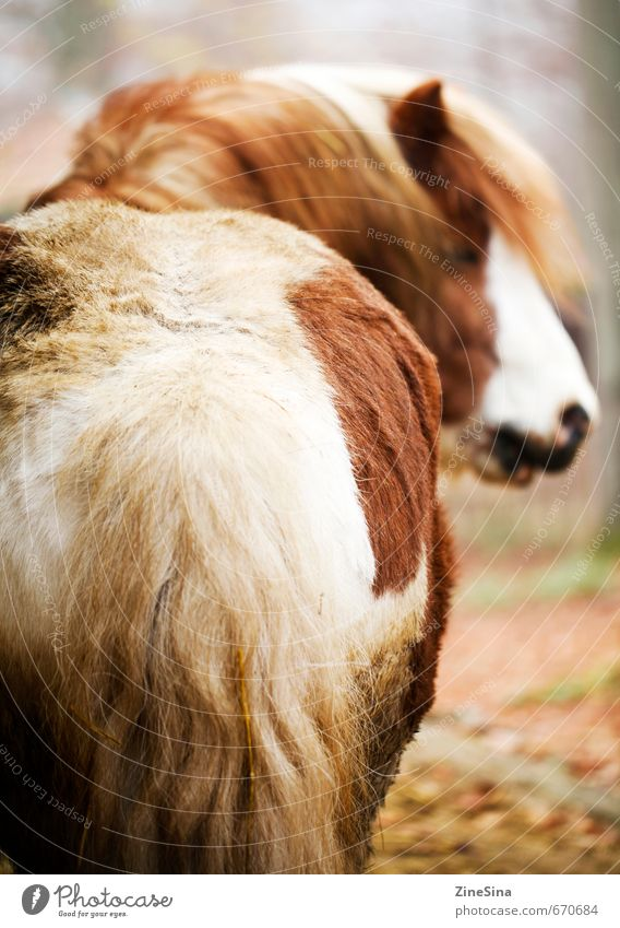 Nature Beautiful Animal Sports Natural Brown Wild Soft Horse Ride