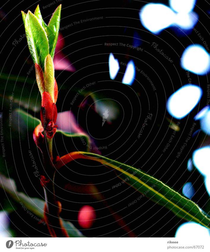 Nature Flower Green Plant Lamp Blossom Spring Garden Environment Bud Blossom leave Undo