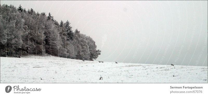 Nature Winter Forest Cold Snow Field Fog Frost November Hoar frost Roe deer Vogtlandkreis