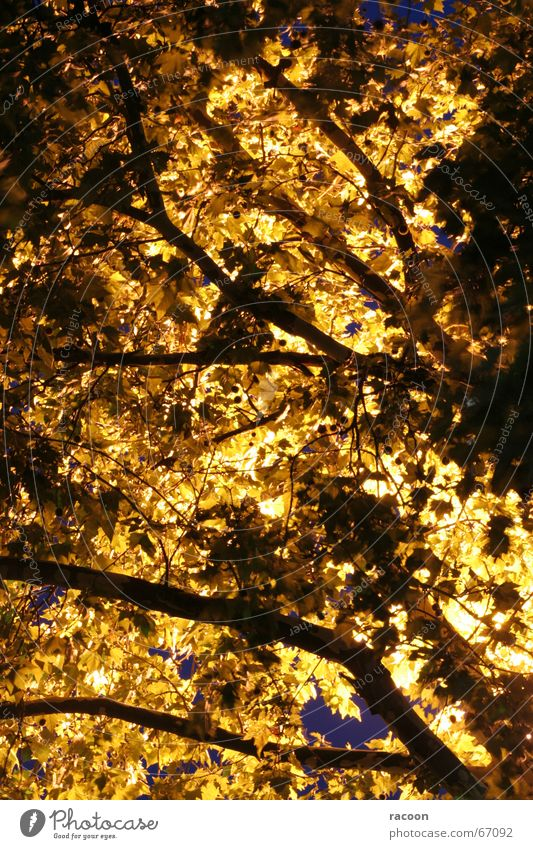 Tree light Leaf Night Yellow Back-light Treetop Fantastic Lamp Twig Branch