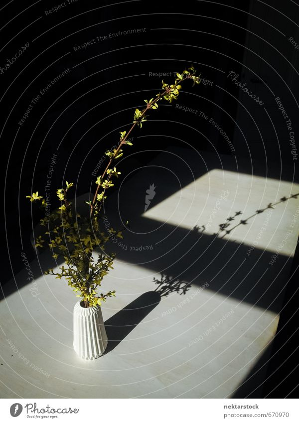 Flowers in a vase Nature Plant Bushes Window Cheap Yellow Black Esthetic Loneliness Hope Modern Pain table contarst flowers kitchen light porcelain shadow Vase