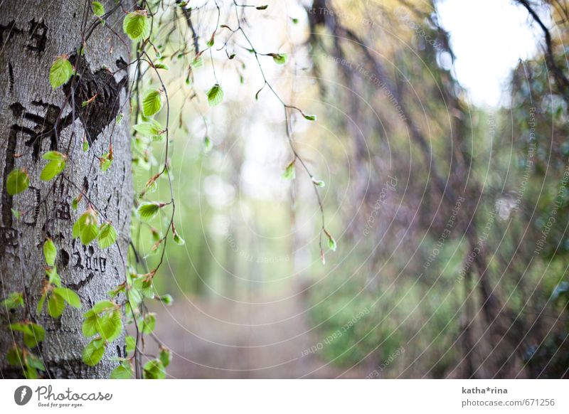Hit by Amor's arrow Nature Summer Tree Jena Wood Heart Arrow Brown Green Love Infatuation Romance amors arrow Colour photo Subdued colour Exterior shot Deserted