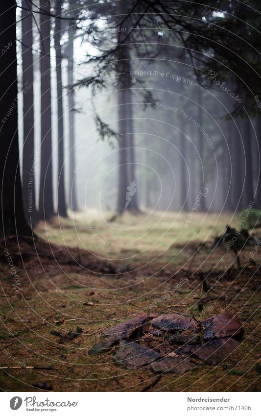 Nature Plant Tree Loneliness Landscape Calm Dark Forest Lanes & trails Moody Fog Hiking Trip Stagnating Mystic Fireplace