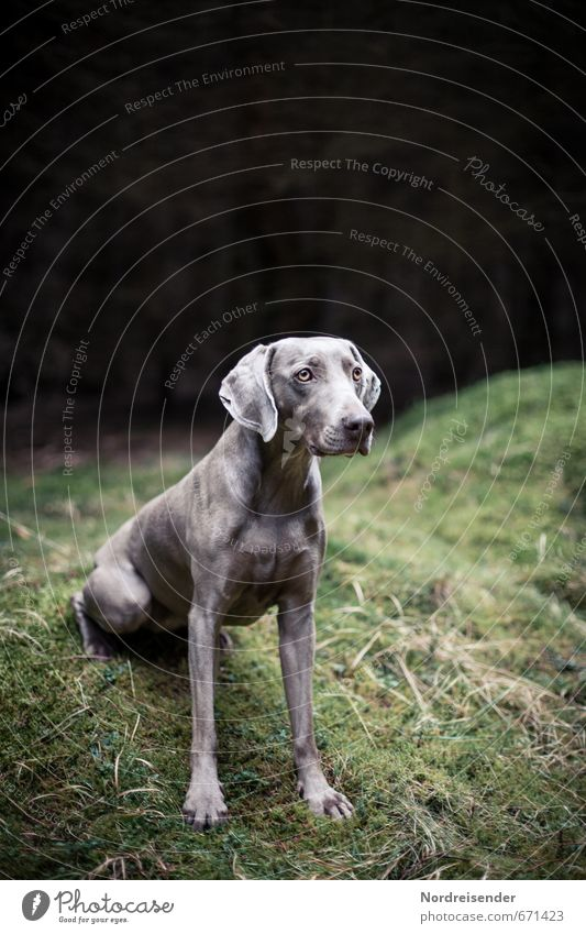 impatiently Life Hunting Trip Grass Moss Meadow Forest Animal Dog 1 Wait Esthetic Dark Muscular Loyal Love of animals Peaceful Disciplined Curiosity Interest