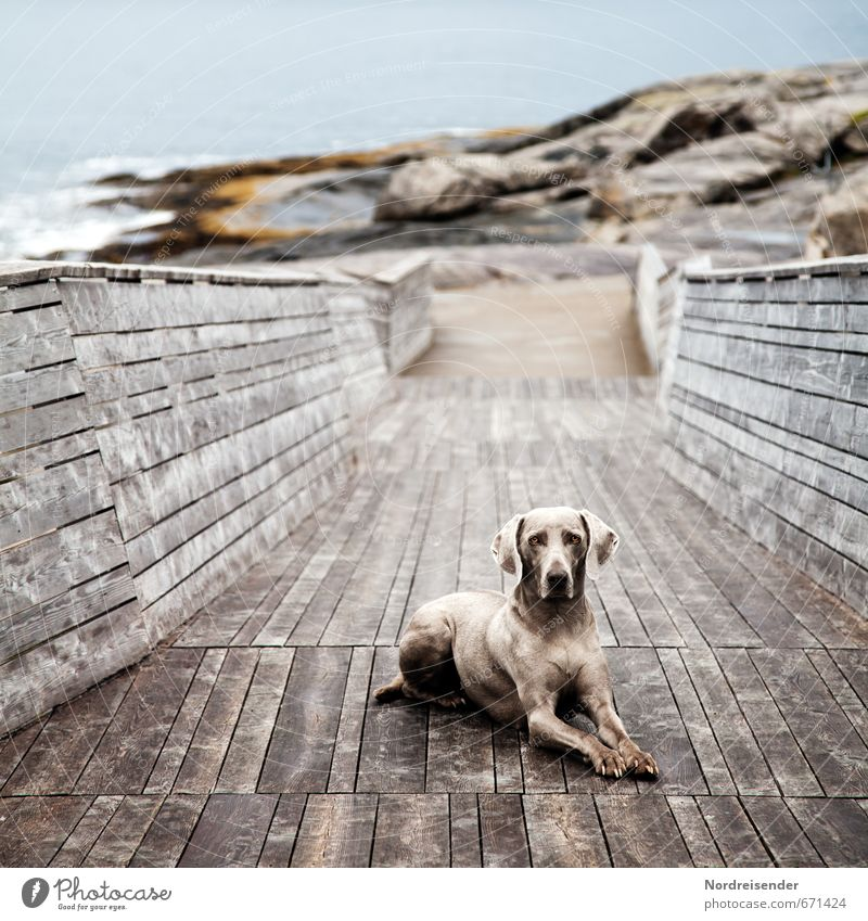 Dog Blue Water Ocean Relaxation Landscape Animal Lanes & trails Coast Wood Stone Brown Contentment Esthetic Watchfulness Hunting
