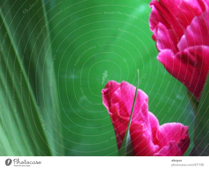 Beautiful Flower Green Plant Red Growth Harmonious Partially visible