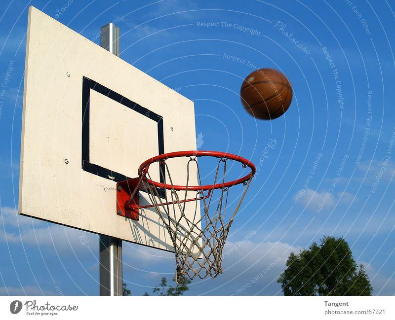 Der ist drin! oder? Sky Sports Movement Flying Success Target Ball Net Throw Sporting event Basket Strike Basketball Basketball basket Ball sports