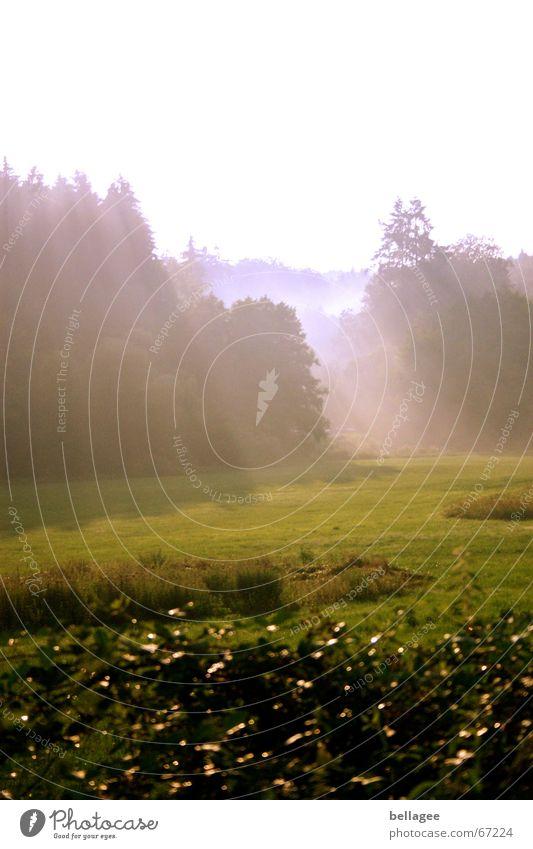 Nature Forest Dark Autumn Meadow Dream Sadness Moody Fog Pure Creativity Fairy tale Really Beam of light