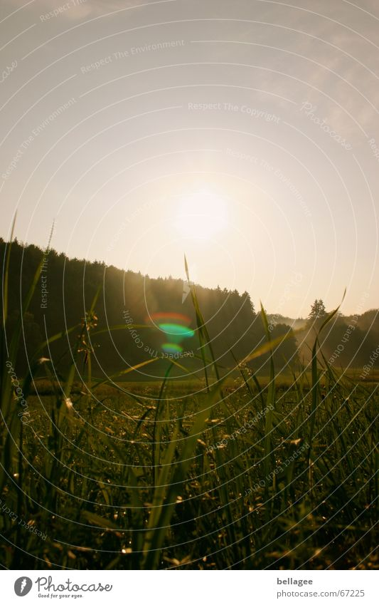 Nature Sun Forest Dark Meadow Grass Moody Lens flare Patch of light