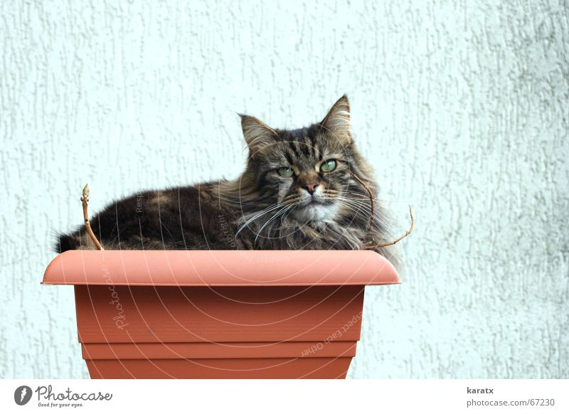 Cat in a bucket Plant Leisure and hobbies Animal Relaxation Summer Garden terrace