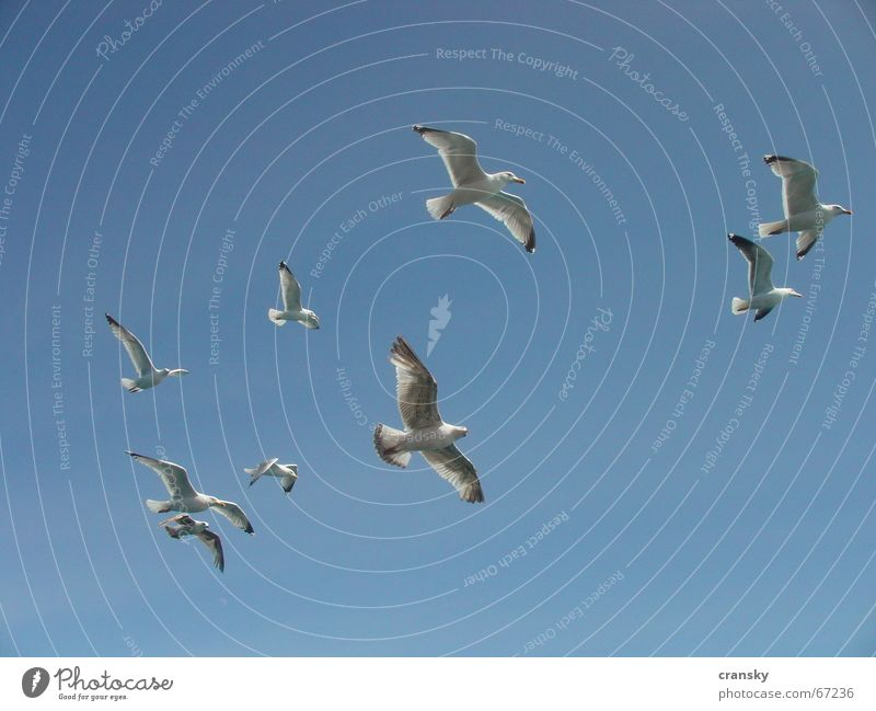 Seagulls at 11 o'clock Vacation & Travel Adventure Far-off places Freedom Summer Summer vacation Aviation Sky Bird Flying Blue Wanderlust Sky blue Cloudless sky