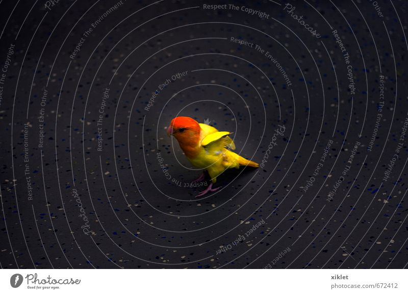 Parakeet Animal Exotic Bird 1 Old Movement Flying Running Exceptional Elegant Free Small Crazy Beautiful Yellow Cool (slang) Serene Surprise Fear Bizarre