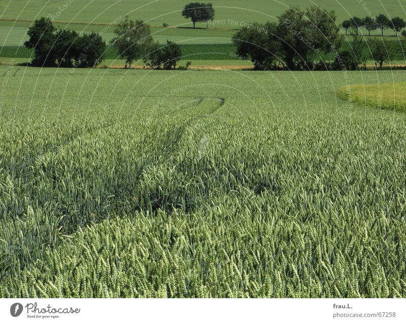 green Degersen Grain Calm Summer Agriculture Forestry Landscape Tree Bushes Field Village Lanes & trails Sadness Green Loneliness Fertile Ear of corn