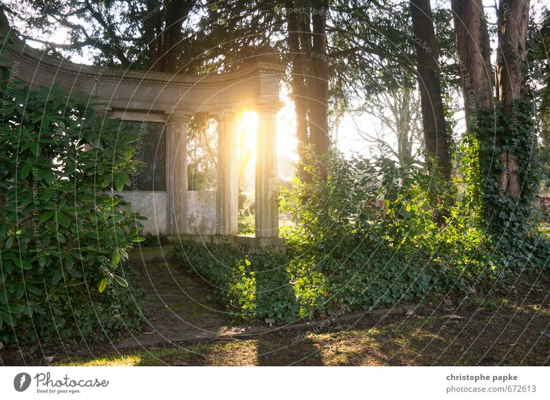 Mysterious Ruins Sunlight Ivy Park Forest Monument Stone Historic Death Cemetery Tomb Temple Virgin forest Grave Colour photo Deserted Reflection
