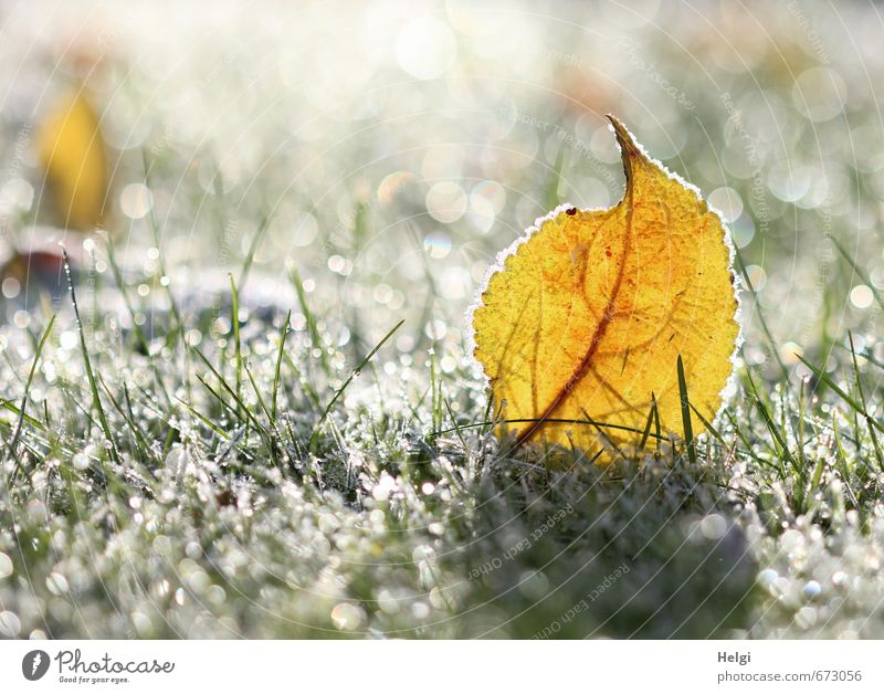 Nature Beautiful Green White Plant Calm Leaf Winter Cold Yellow Environment Grass Natural Exceptional Garden Ice