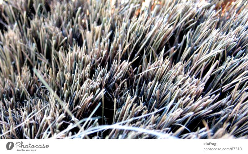 ...sweep well Close-up Broom Grass Field Sweep Closed Rasping Gray Miniature Craft (trade) Hallway brush forest hairy furry mishmash structure