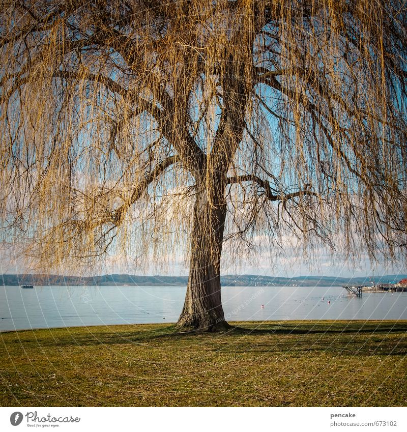 refuel Nature Landscape Spring Beautiful weather Tree Park Lakeside Sign Esthetic Authentic Exceptional Power Weeping willow Willow-tree Lake Constance