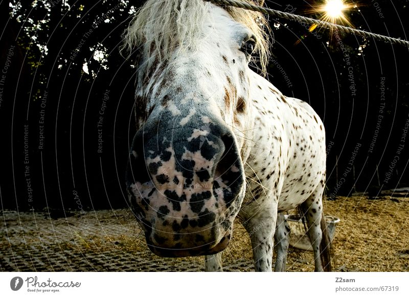Look me in the eyes mare. Horse Animal Pasture Straw Frontal Evening snort Bangs schätti stable