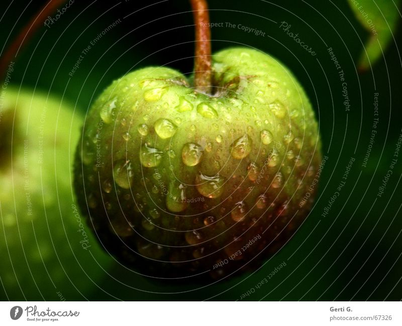 Green Dark Fruit Nutrition Drops of water Delicious Stalk Anger Harvest Apple Tomato Fruity Crunchy Apple tree Hydrophobic Garden fruit