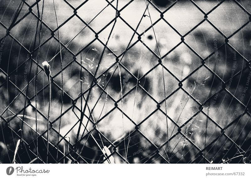 White Black Loneliness Emotions Garden Think Catch Fence Thought Captured