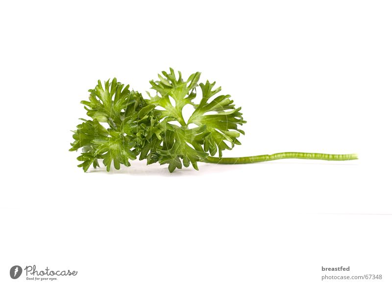 parsley Parsley Nutrition Herbs and spices Green Delicious Midday food. kitchen