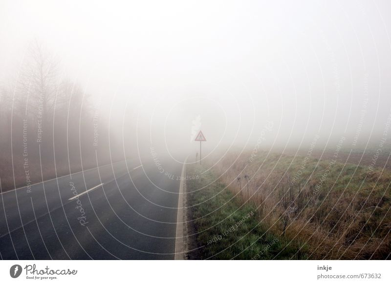 spooky walk Environment Air Autumn Winter Weather Bad weather Fog Tree Grass Margin of a field Outskirts Deserted Transport Traffic infrastructure Road traffic